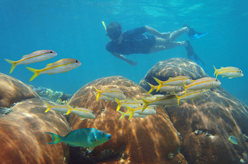Man snorkeling in a coral reef and school of fish