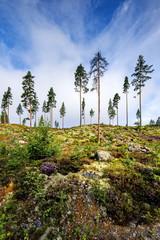 Wall Mural - Norwegia , krajobraz lesny, las