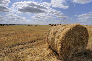 Straw bales on farmland