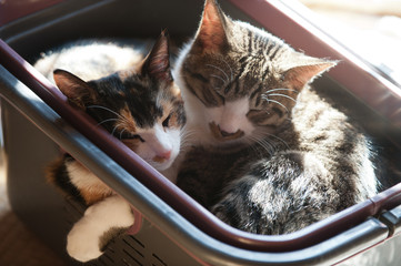 sister cat