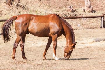 Horse Portrait Chestnut Animal