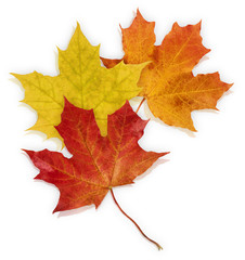 Basic_Autumn_Leaves