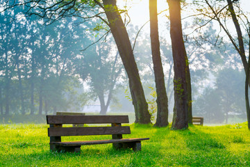 Photo sur Plexiglas Parc Naturel bench in the natural park of the city in the morning