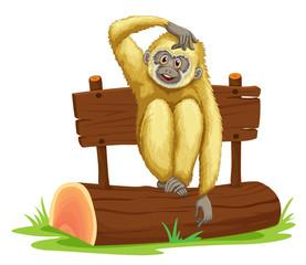 Gibbon sitting on log