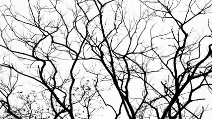 Branches in black on white
