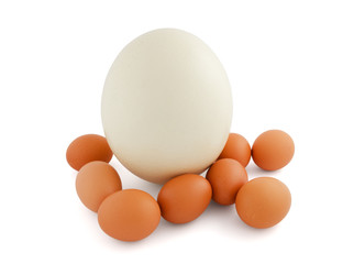 ostrich and chicken eggs isolated on white