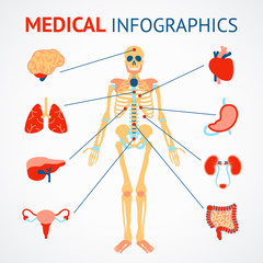 Human organs infographic