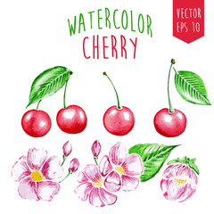 Watercolor cherry elements