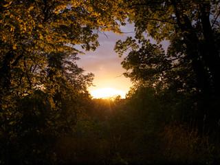 Abendrot strahlt durch die Bäume