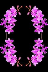 Wall Mural - Phalaenopsis hybrid