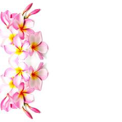 Wall Mural - pink Plumeria
