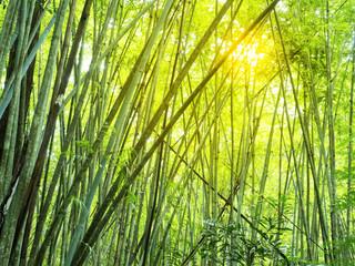 bamboebos in tropisch