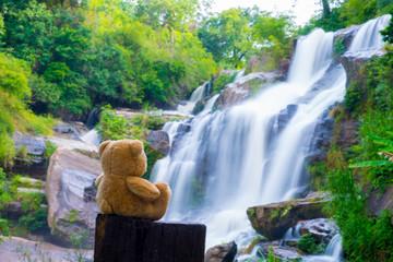 Brown bear sitting at the waterfall