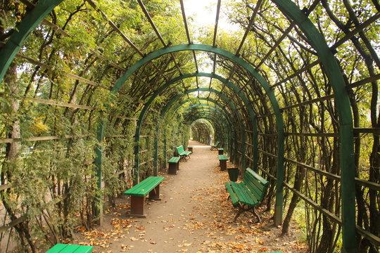 Собственный сад в Гатчине