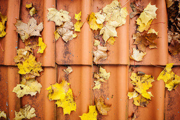 Fall leaves on roof tiles