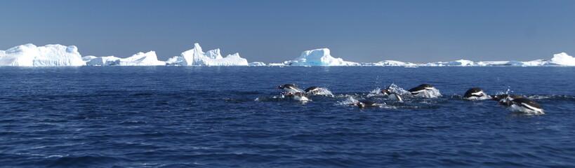 Penguin diving near the icebergs (Antarctica)