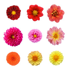 Set nine dahlias isolated on white background