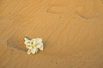 Words on sand 839.