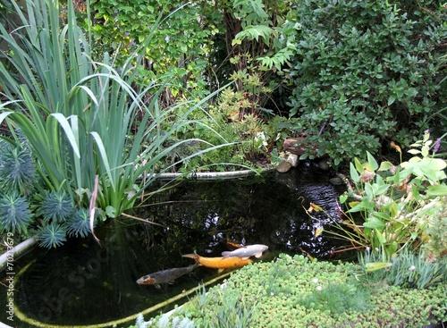 Bassin de jardin et carpes ko photo libre de droits sur for Carpe koi a acheter