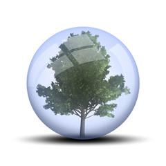 Arbre dans une bulle : érable