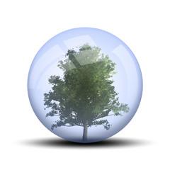Arbre dans une bulle : ginko