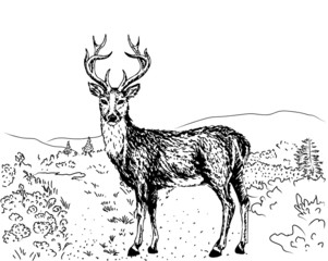 sketch of reindeer