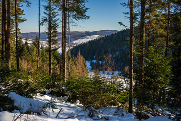 snowy coniferous forest in mountains