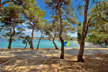 Pine tree sand beach in Croatia