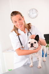 cheerful young veterinary taking care of a french bulldog