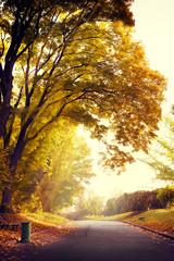 Fototapete - sunrise in the autumn park