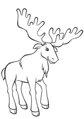 Elk standing in the forest and looking at berries
