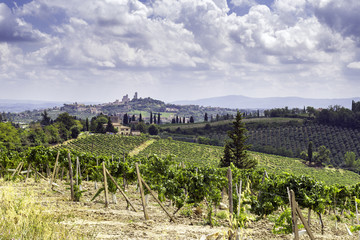 Vineyards surrounding San Gimignano, Tuscany. Color image