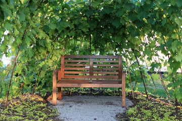 Wooden brown bench