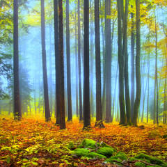 Colorful autumn forest scene