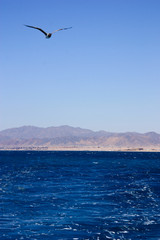 Sea travel by great yaht in hurghada