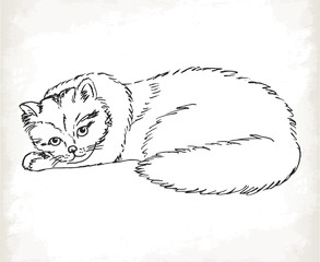 Fluffy cat in sketch style on a white background.