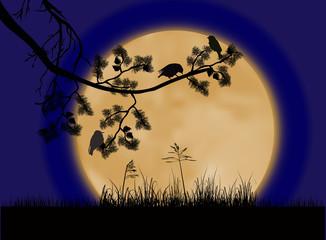 birds on pine tree branch under full moon