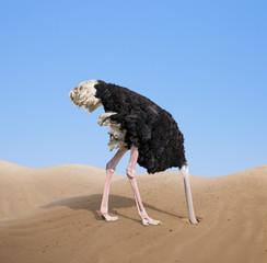 Papiers peints Autruche scared ostrich burying its head in sand concept