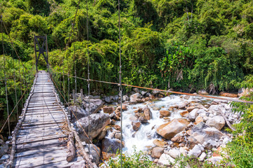 Suspension Bridge in Jungle