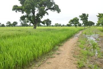 La campagne agricole au Burkina faso