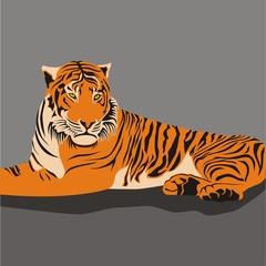 Illustration Tiger