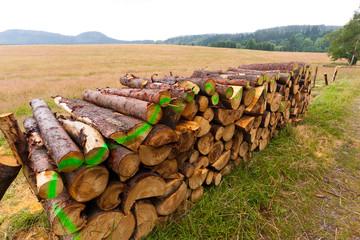 Fototapeta kłody drzewa leżą na skraju lasu przygotowane do transportu obraz
