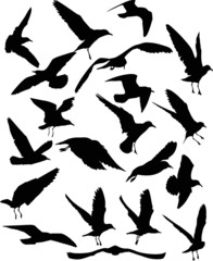 set of twenty gull black silhouettes