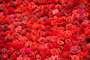 Background made of red roses