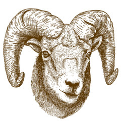 vector illustration of engraving ram head