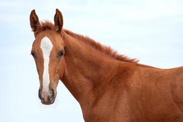 Don horse