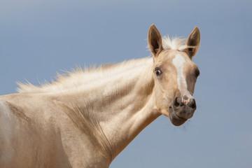Portrait of foal