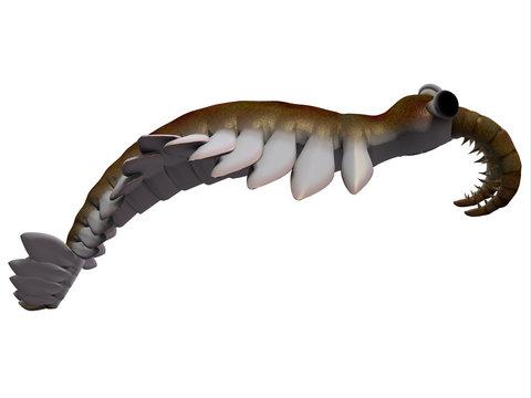 Cambrian Anomalocaris Side Profile