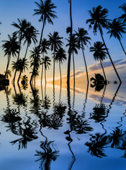 Coconut tree silhouette with sunset background
