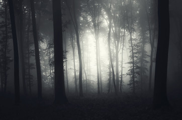 light in a foggy forest